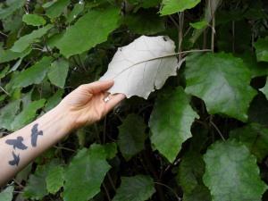 Bushman's toilet paper